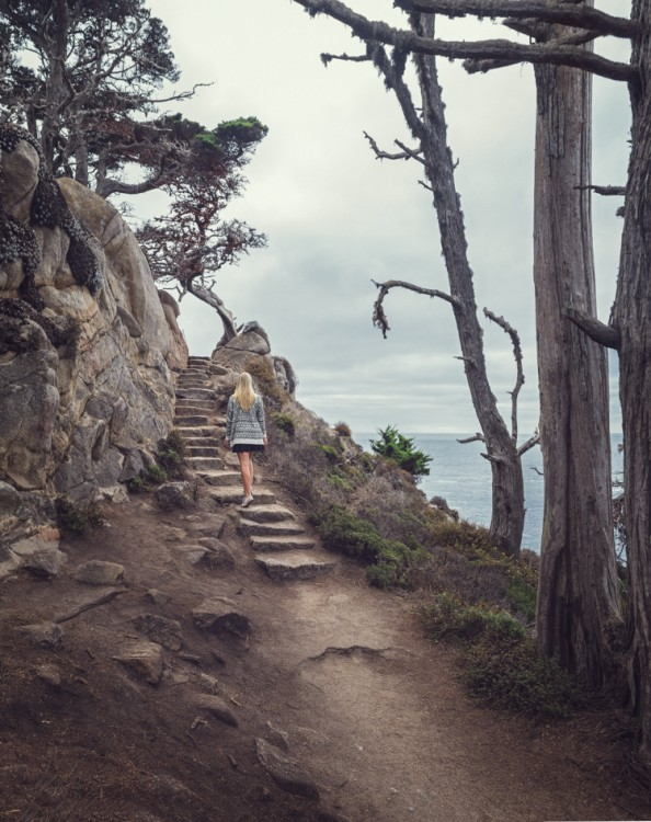 Kuolleet puut kehystävät maisemaa Point Lobos:in kansallispuistossa